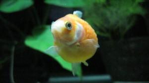 オレンジピンポン3